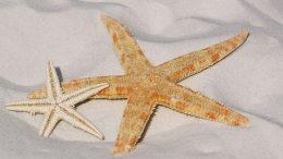 plage, mer, vacances, mobil home, Siblu