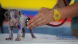 auxiliaire vétérinaire, formation auxiliaire vétérinaire, métier vétérinaire, formation distance, e-learning